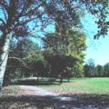 Parco del Roncajette – Via Sant'Orsola Vecchia