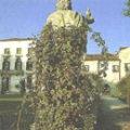 Giardino di Villa Widmann – Bagnoli di Sopra