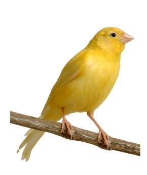 Fiera dell'Angelo e 54° Fiera degli Uccelli
