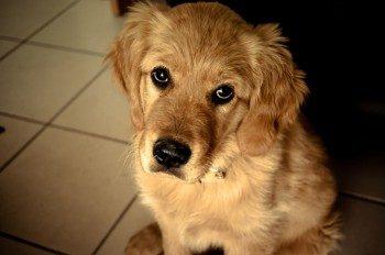 Il tuo cane ti capisce…ma tu, capisci il tuo cane?