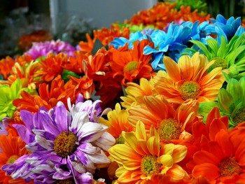 Concorsi floreali di 'Padova fiorisce'