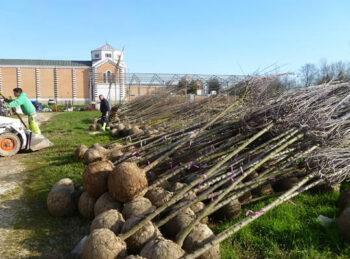 Nuovi alberi a Padova: il Comune ne pianta 340