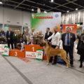 I vincitori della 55^ Esposizione Internazionale Canina di Padova
