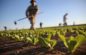 L'ombra delle agromafie sul made in Italy, affare internazionale da 100 miliardi di euro