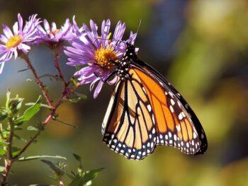 Riapre la Casa delle Farfalle