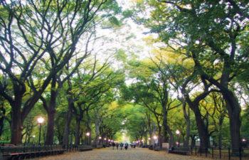 Pianificare il verde urbano come strumento di resilienza urbana