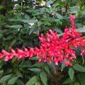 Visita guidata all'Orto Botanico