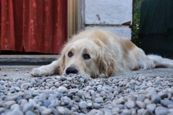 Inaugurazione dell'area cani in via Fratelli Cervi
