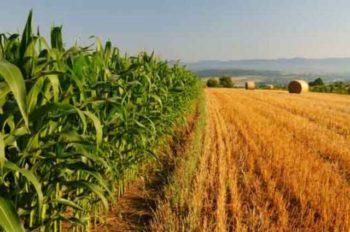 A Vo' Euganeo paralizzata l'agricoltura