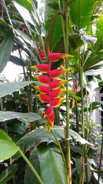 Visita guidata dell'Orto Botanico di Padova