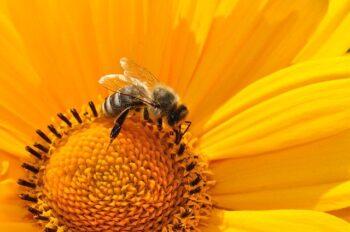 Corso di apicoltura
