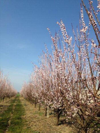 Clima: primavera con il gelo tardivo