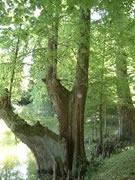 Giardino Storico di Villa Valmarana – Saonara
