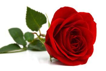 """San Valentino """"Romantic Dinner"""" al Pedrocchi"""