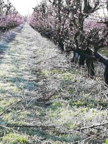 La primavera porta il gelo nelle campagne padovane